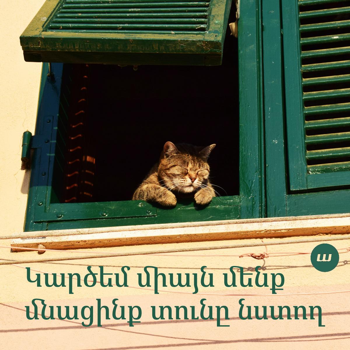 Դուն, ես եւ կատուն